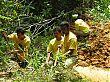 digging_digging.jpg
